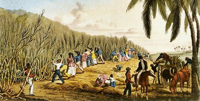 Sugarcane Plantation Workers